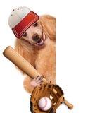 Chien de base-ball avec un base-ball Photo libre de droits