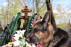 Chien de berger allemand près de la tombe Images libres de droits