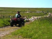 Chien de berger moderne Image libre de droits