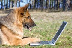 Chien de berger s'étendant sur l'herbe avec l'ordinateur portatif images stock