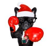 Chien de boxe des vacances de Noël photographie stock