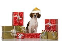 Chien de briquet avec des cadeaux de Noël Photos stock