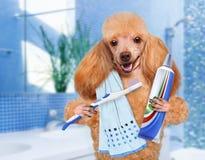 Chien de brossage de dents Photo stock