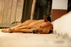 Chien de Brown dormant dans countryside1 Photo stock