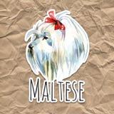 Chien de caniche maltais Le Bolonais Jouet ou caniche miniature sur le fond d'aquarelle Chiot mignon avec le noeud papillon photographie stock