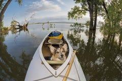 Chien de canoë Photographie stock