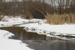 chien de chasse par la rivière Première source photographie stock