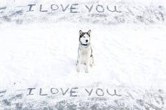 Chien de chien de traîneau sibérien et une inscription sur la neige - je t'aime Photographie stock