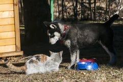 Chien de chiot et chat enroués de rue Photographie stock libre de droits