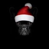 Chien de Christmasn le père noël sur le backgroud noir Images stock