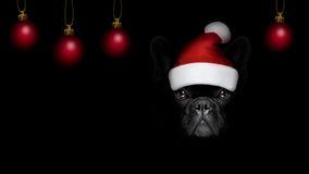 Chien de Christmasn le père noël sur le backgroud noir Images libres de droits