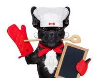 Chien de cuisinier de chef Image libre de droits
