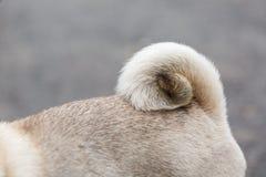 Chien de Cutie marchant sur la rue Concept d'animal familier Image stock