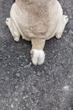 Chien de Cutie marchant sur la rue Concept d'animal familier Image libre de droits