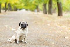 Chien de Cutie marchant sur le fond de nature Concept d'animal familier Photographie stock libre de droits