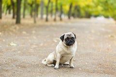 Chien de Cutie marchant sur le fond de nature Concept d'animal familier Images libres de droits