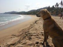 Chien de ` dans le ` de plage Image libre de droits