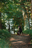 Chien de dobermann, bel animal familier Images libres de droits