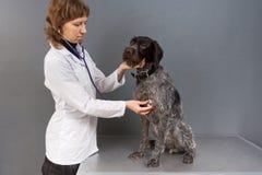 Chien de examen vétérinaire avec le stéthoscope dans la clinique de vétérinaire Photos stock