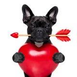 Chien de flèche de valentines Image stock