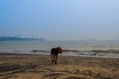 Chien de Funy sur la plage Photographie stock