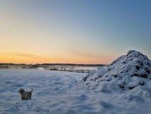 Chien de glace photographie stock libre de droits