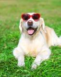 Chien de golden retriever dans des lunettes de soleil se trouvant sur l'herbe Photographie stock libre de droits