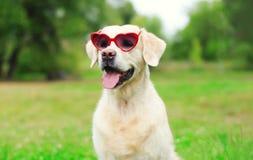 Chien de golden retriever dans des lunettes de soleil sur l'herbe en été Photographie stock libre de droits