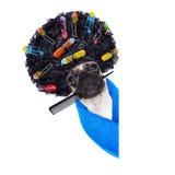 Chien de groomer de coiffeur Photos libres de droits