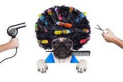 Chien de groomer de coiffeur Image libre de droits
