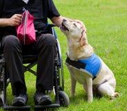 Chien de guide de Labrador et son propriétaire handicapé image libre de droits