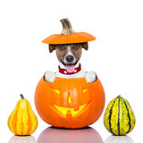 Chien de Halloween photos stock