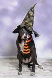 Chien de Halloween Photo libre de droits