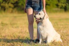 Chien de Labrador dans la nature Image libre de droits