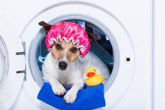 Chien de lavage images stock