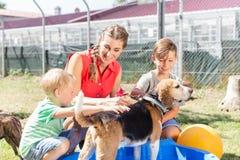 Chien de lavage de famille dans la piscine du refuge pour animaux faisant attention image libre de droits