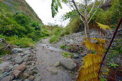 Chien de lave de Pinatubo Photo stock