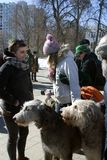 Chien de chien-loup irlandais et son propriétaire à la célébration de jour du ` s de St Patrick à Moscou Photographie stock