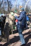 Chien de chien-loup irlandais et son propriétaire à la célébration de jour du ` s de St Patrick à Moscou Image libre de droits