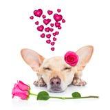 Chien de malade d'amour de valentines Images libres de droits