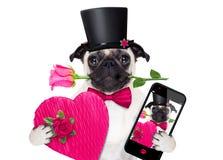 Chien de malade d'amour de valentines Photographie stock libre de droits