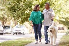 Chien de marche de couples supérieurs le long de rue suburbaine image stock