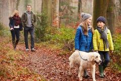 Chien de marche de famille par la région boisée d'hiver Photos stock