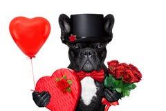 Chien de marié de valentines Photos libres de droits