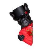 Chien de marié de valentines Photographie stock libre de droits