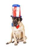 Chien de mastiff le Jour de la Déclaration d'Indépendance Image stock