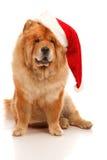 Chien de Noël Images libres de droits
