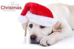 Chien de Noël Photographie stock libre de droits
