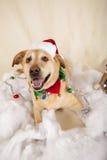 Chien de Noël Photo stock