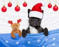 Chien de Noël avec le sommeil d'ours de nounours Image libre de droits